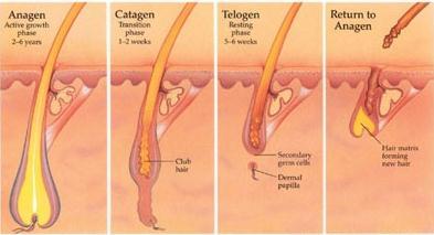 Doctor insights on: Slow Facial Hair Growth Men - HealthTap
